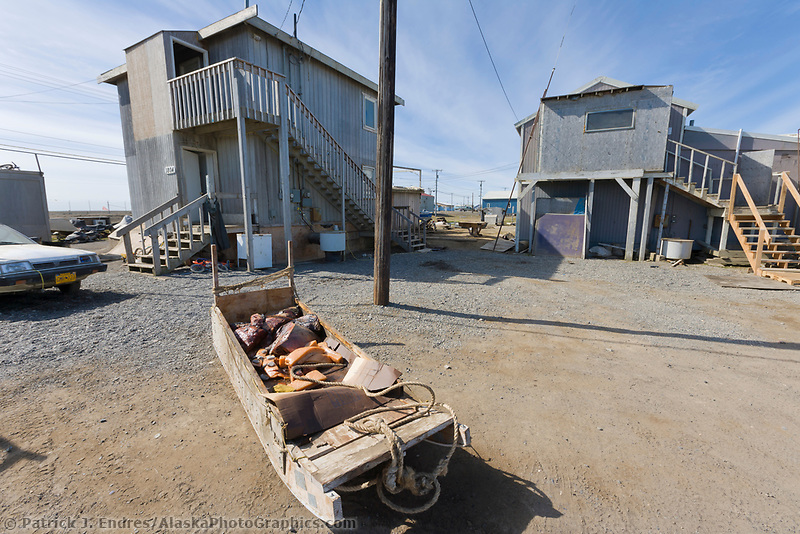 Whale meat in a sled along the streets of Utqiagvik (Barrow), Alaska.