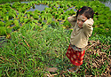 Child at the plantation helps the family to move bunches of rice seedling to a paddy field.