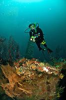 Diver on The Wreck Bianca C<br /> Grenadines