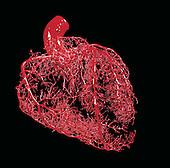 ha cast heart 7