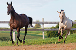 20110820 H-Arabians