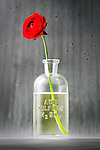 A Ranculus flower blooms bright red with its stem in a bottle of sulfuric acid.