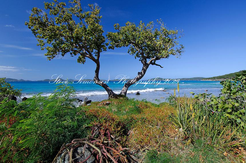 Shoreline in front of Gallows Point Resort<br /> St. John<br /> U.S. Virgin Islands