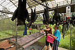 Volunteer wildlife carers of Tolga Bat Hospital in the cage holding area of  Spectacled Flying Fox orphans (Pteropus conspicillatus)