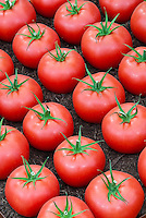 Tasty Tomatoes Stock Photos