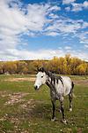 Montana Stock Photos