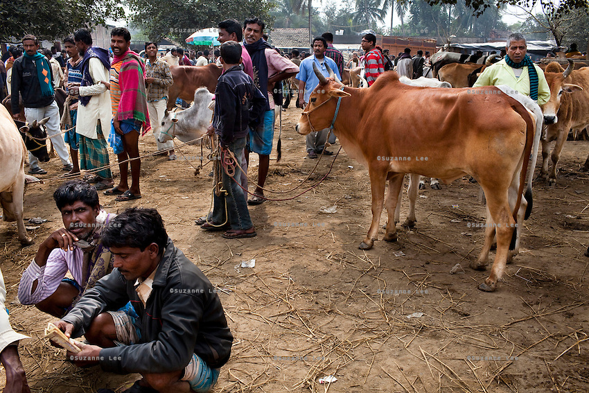 Men gather to buy and sell cattle at the weekly cattle market that happens in Birohi, a town close to the India-Bangladesh Border, in Nadia district, West Bengal, India, on 19th January, 2012. The larger cows, priced at almost INR 10,000 (USD 190) each are often smuggled across the porous borders by wading across the rivers to be sold at a profit in Bangladesh. Recently, a torture video of a captured cattle smuggler surfaced on the internet, provoking outrage at the high-handedness of the Indian Border Security Force. Photo by Suzanne Lee for The National (online byline: Photo by Szu for The National)