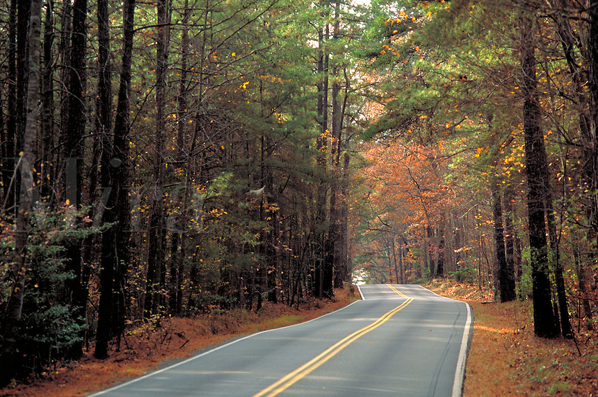 Road winding through Autumn woods in Virginia's Tidewater region (near Williamsburg.). Williamsburg Virginia USA.