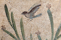 Fresco detail of bird and plants on a white background, from a small room in the Casa dell Efebo, or House of the Ephebus, Pompeii, Italy. This room is decorated in the Fourth Style of Roman wall painting, 60-79 AD, a complex narrative style. This is a large, sumptuously decorated house probably owned by a rich family, and named after the statue of the Ephebus found here. Pompeii is a Roman town which was destroyed and buried under 4-6 m of volcanic ash in the eruption of Mount Vesuvius in 79 AD. Buildings and artefacts were preserved in the ash and have been excavated and restored. Pompeii is listed as a UNESCO World Heritage Site. Picture by Manuel Cohen