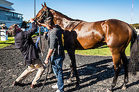 OLDSMAR, FLORIDA - FEBRUARY 11: Scenes from around the track at Tampa Bay Downs on February 11, 2017 in Oldsmar, Florida (photo by Douglas DeFelice/Eclipse Sportswire/Getty Images)