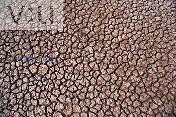 Mud cracks due to drought.