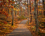 Autumn color at Nickerson State Park in Brewster, Cape Cod, Massachusetts, USA