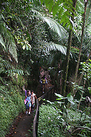 6/28/08------ Tourists walk along a hiking path in the Rain Forest of the Caribbean, El Yunque, in Rio Grande, Puerto Rico..Photo by Angel Valentin, copyright 2009.