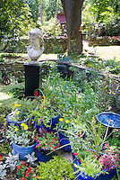 Blue color theme coordination of pots container garden, with statue head and birdbath in small walled garden, mostly annual flowers and plants, marigolds, begonias, dusty miller, celosia, herbs parsley, dill, etc.