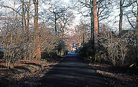 London: Hampstead Garden Suburb--the Big Wood.  Photo '90.