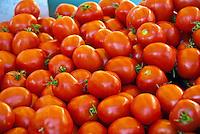 Tomatoes, savory, red, edible fruit,  (Solanum lycopersicum) Farm-fresh produce fresh, fruits, vegetables,