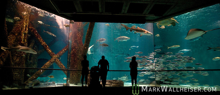 Visitors enjoy watching the fish in the Gulf of Mexico tank in the Audubon Aquarium of the AmericasAudubon Aquarium of the Americas in New Orleans, LA August 21, 2009.  (Mark Wallheiser/TallahasseeStock.com)