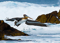 &quot;OCEAN AVIATOR&quot;<br />
