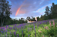 I've shot this field in Sugar Hill, NH during the Lupine Festival many times, but there's always ways to improve the shot.  I was in an adjacent field for sunrise when the rainbow materialized behind me, and I knew I had to rush and hope it was over the church.  Pure magic light!