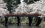 Visitors cross a foot bridge at the Cherry Blossom Festival held in Oyo Park near Hirosaki Castle in Aomori Prefecture in Northern Honshu, Japan. Over 1500 cherry trees come into bloom from late April to Early May. (Jim Bryant Photo)......