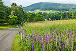 A wildflower meadow in Hartland, VT, USA