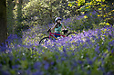 2017_04_24_Bow_Wood_Bluebells_Bike