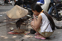 Hanoi<br /> , Vietnam - 2007 File Photo -<br /> <br /> A young Vietnamese girl feed a chicken in a cage.<br /> <br /> <br /> <br /> <br /> photo : James Wong-  Images Distribution