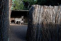 Horse back riding with Zebras, Cuixmala, Costa Alegre, Jalisco. Eco Chic Hotels, Mexico
