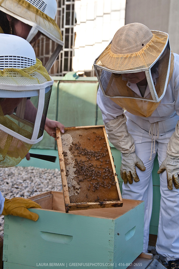 Urban beekeeping by the Toronto Beekeepers Cooperative on the rooftop of the Royal York Hotel, Toronto, Canada