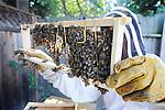 Jack Ip's bees