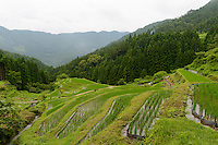Rice paddies in Kamikatsu, Katsuura, Tokushima Prefecture, Japan, July 7, 2014. The Irodori Project is based in the mountain town of Kamikatsu, Tokushima Prefecture. Farmers - many of them elderly - grow leaves and flowers to use to decorate Japanese food in restaurants and hotels across the nation.
