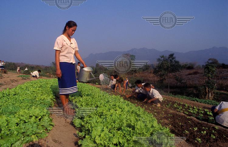 Schoolchildren tending the school vegetable garden.