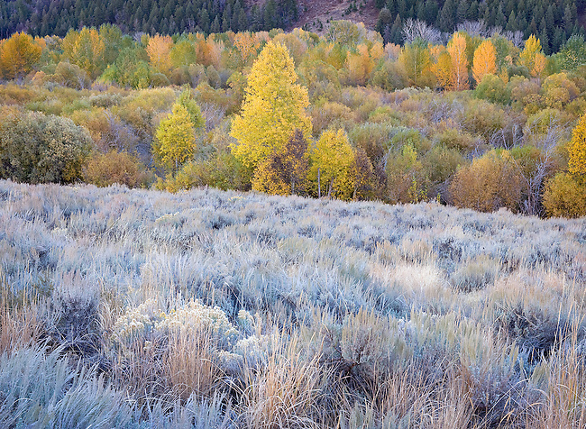 frosty autumn morning in pasture and forest, Sun Valley, Idaho