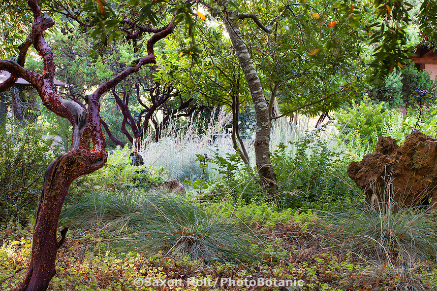 Tapestry of shady groundcovers with Oaks and manzanita shrubs in naturalistic California native plant garden.