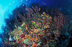 The colourful reefs of Saint Lucia