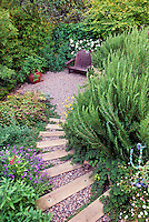 Drought tolerant garden with Rubus pentalobus (Creeping Bramble) and upright Rosemary along path leading down to gravel patio