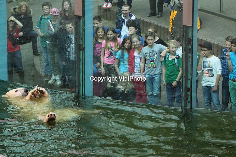 Foto: VidiPhoto<br /> <br /> RHENEN - Feest voor de ijsberen van Ouwehands Dierenpark. In de Rhenense dierentuin werd dinsdag het startsein gegeven voor de landelijke campagne Pole to Pole van de European Assocciation of Zoos and Aquaria (EAZA) om de klimaatverandering tegen te gaan. Leerlingen van basisschool Het Veldhuis uit De Meern (foto) bij Utrecht legden dinsdag als eersten in Nederland de eed af of minder energie te verspillen en zo opwarming van de aarde mee te helpen voorkomen. Omdat ijsberen door de smeltende ijskappen daar mede de dupe van zijn, werd het startschot voor de actie gegeven bij de ijsberen in Ouwehands. Die kregen als beloning een extra tractatie.