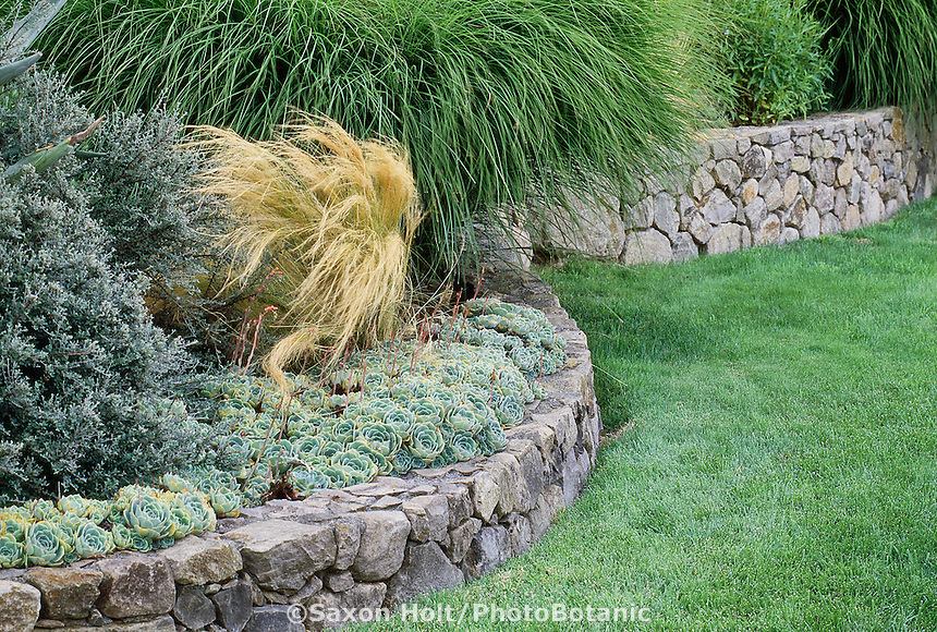 low retaining rock stone masonry wall separating lawn and garden of succulents and grasses in california