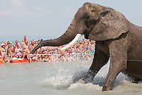 Circus elephant of the Caselly Family takes a bath in lake Balaton in promotion of the Circus Night event at Balatonlelle (about 140 km South-West of capital city Budapest), Hungary on July 18, 2015. ATTILA VOLGYI