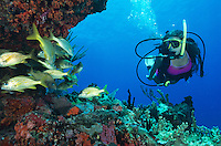 Diver at Eagle Shoals.<br />