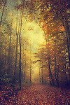 Moody forest impression on an autumn day.<br />