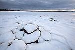 Pancake ice formations around shoreline rocks in the Mount Desert Narrows off Thompson Island, Acadia National Park, Maine, USA