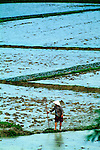A farmer checking his flooded rice fields in Xieng Khuang, Laos.