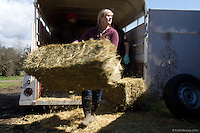 Alexis Blakey, age 19, from Oso, Wash. unloads one of 70 bales of hay donated and trucked from Bellingham, Wash., for the horses remaining on Summer Raffo's farm in Oso, Wash. on April 1, 2014.  Blakey was a friend Raffo and headed to her farm past roadblocks as soon as she heard Raffo was missing.  She has been caring for the horses daily since.