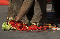 An Asian Elephant eats fruits during a performance at brooklyn bridge to commemorate its inaugural show in Brooklyn. Photo by Eduardo Munoz Alvarez / VIEWpress.