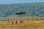 Maasai women in Kenya cross the open savannah between the Mara River and their village. The red and orange that the Massai wear are warning colors to the area's lions:  Maasai and lions are adversaries sharing the same environment.