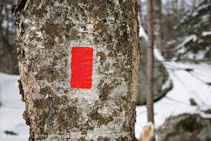 A properly applied trail blaze along the Artist's Bluff Path in  White Mountains, New Hampshire USA