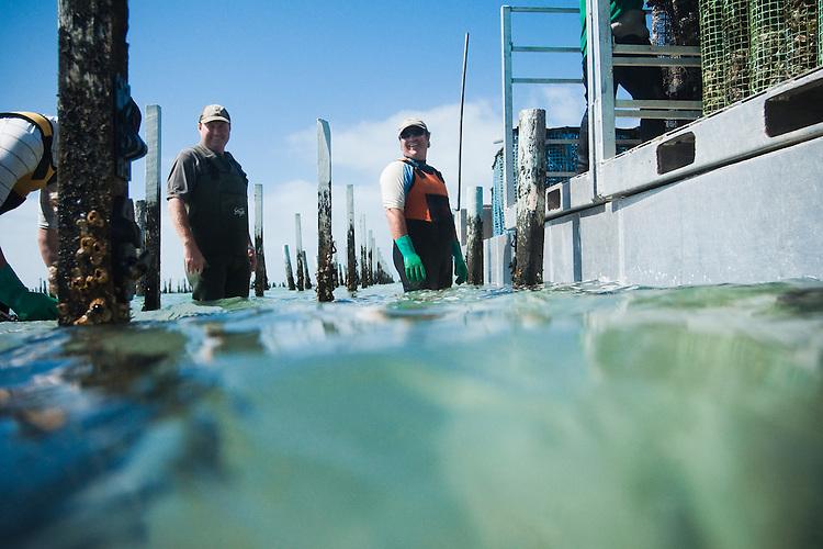 Coffin Bay Oyster Farm, South Australia