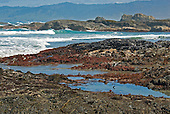 Tidepools at low tide on rocky coast, Mendocino County, California, USA