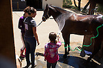 Youth wash a horse after riding lessons during summer camp at Westwind Community Barn in Los Altos Hills.